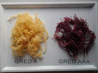 Rumpai Gred AAA (Purple) dan Gred A (Putih)